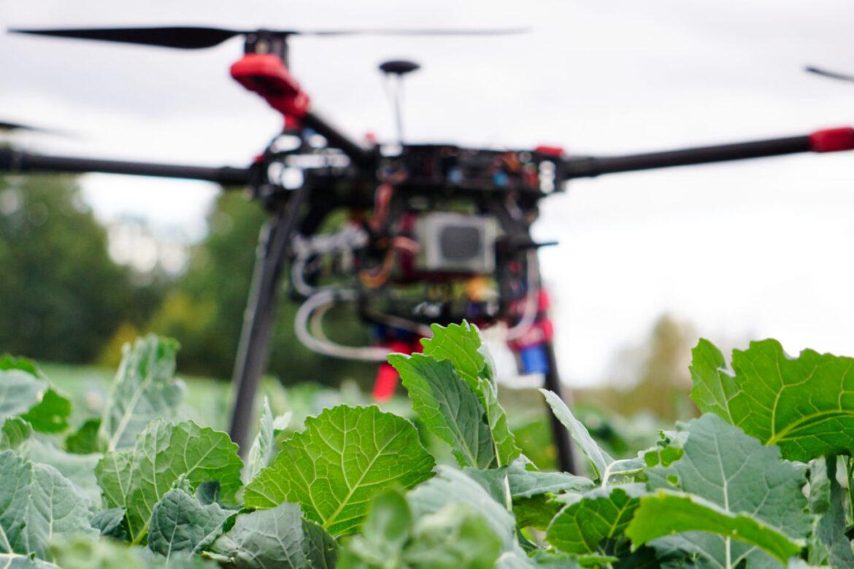 Skanowanie rzepaku Dron rolniczy