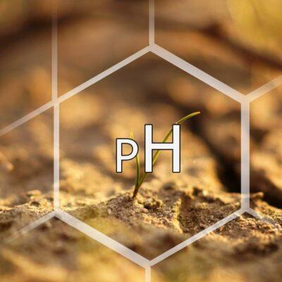 Badanie pH gleby