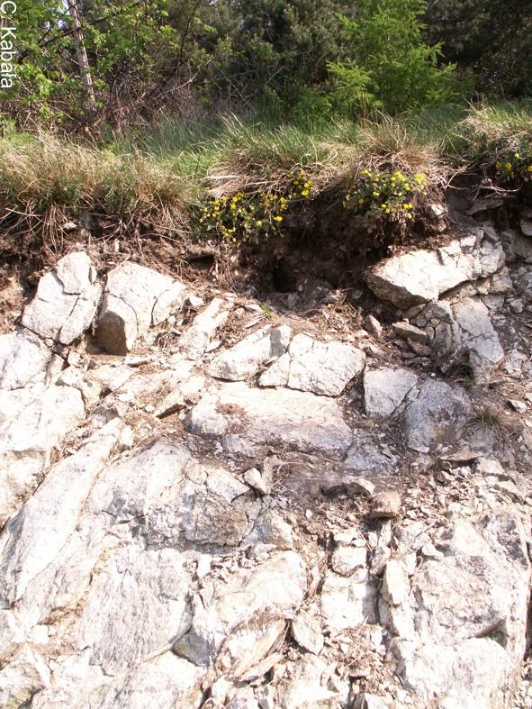 Gleba inicjalna - skalista