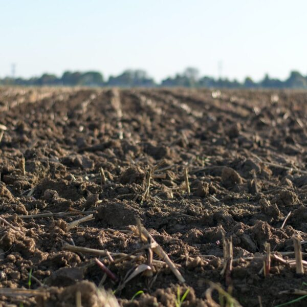 Gleba próchnica, materia organiczna