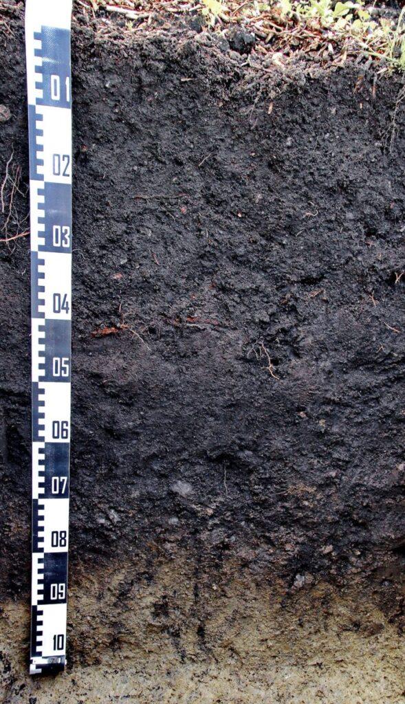 Hortisol – antropogeniczna gleba ogrodowa