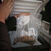 pobranie próby gleby azot mineralny, zamrażanie prób