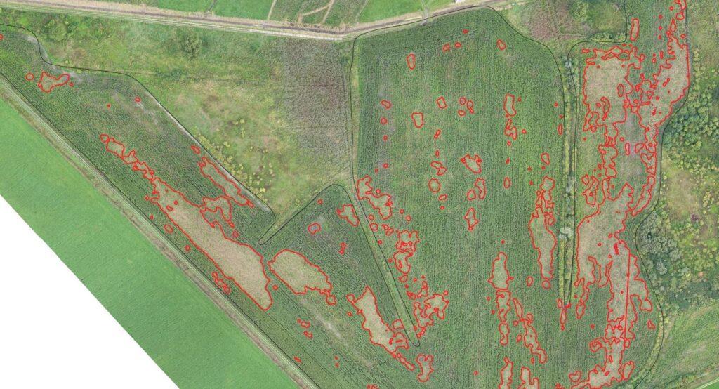 Pomiar szkód łowieckich z drona mapa